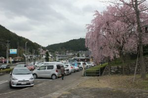 道の駅にある枝垂桜(2017.4)