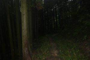 杉木立の遍路道(2017.10)