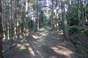 木立の遍路道(2017.11)