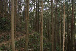 竹藪から木立に(2018.2)