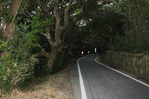 38番金剛福寺手前は樹木トンネル(2018.2)